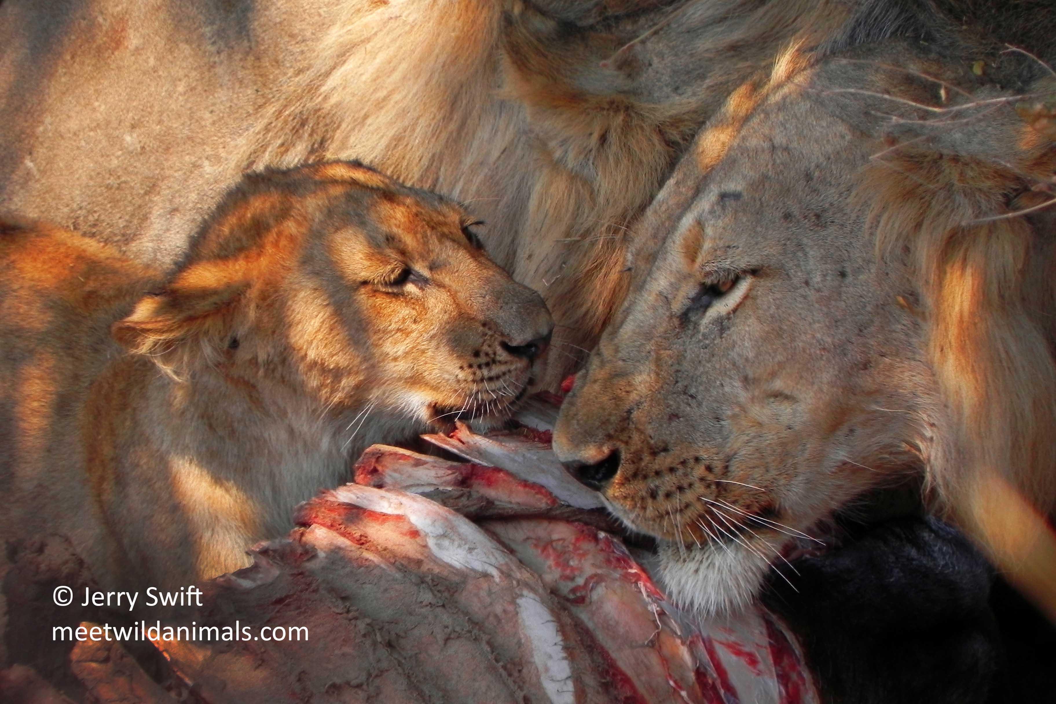 Tanzania - Meet Wild Animals