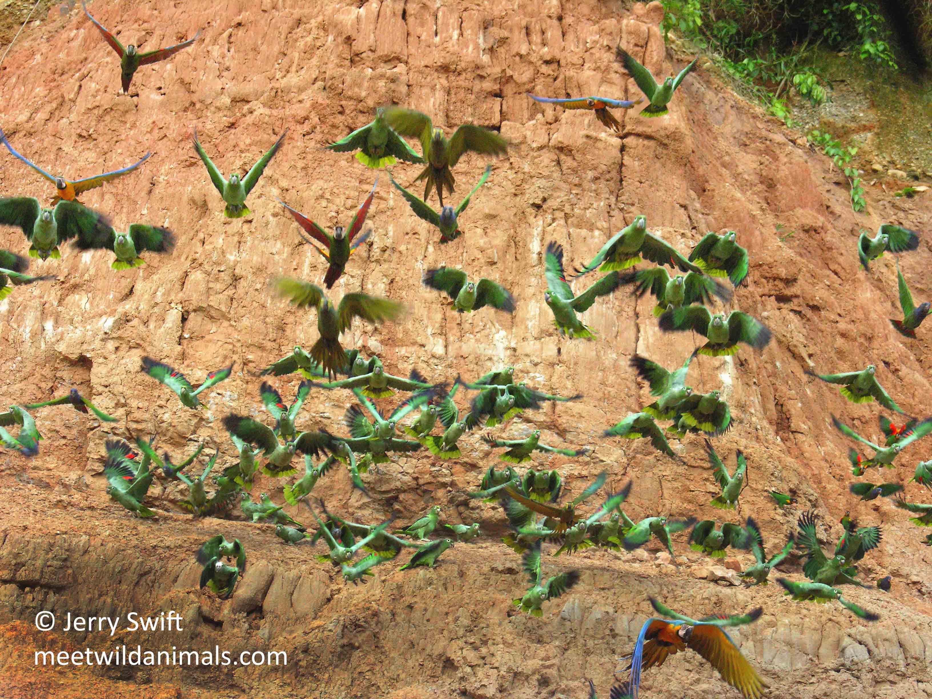 tour du monde observation animaux